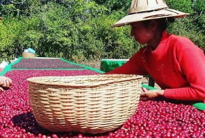 Rohkaffeebohnen Myanmar