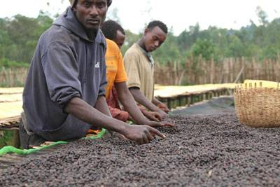 Rohkaffeebohnen Äthiopien Yirgacheffe