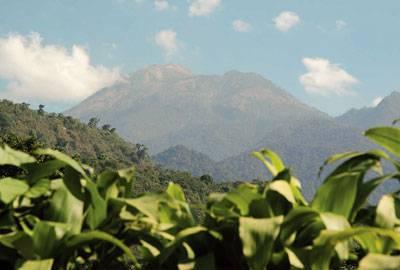 Guatemala Rohkaffeebohnen