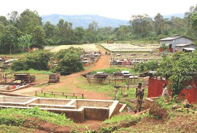 Yirgacheffe Rohe Kaffeebohnen Äthiopien