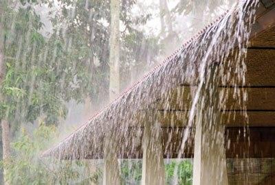 Monsooned Malabar rohe Kaffeebohnen