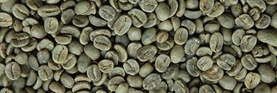 Rohkaffee Guatemala SHB