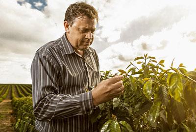 Brasilien Santos rohe Kaffeebohnen