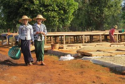 Myanmar Kaffee Direkthandel