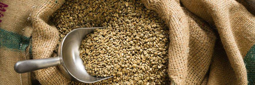 gruene-kaffeebohnen-rohkaffee-ungeroestet