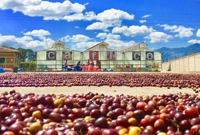 Honduras Bio Fair Kaffee
